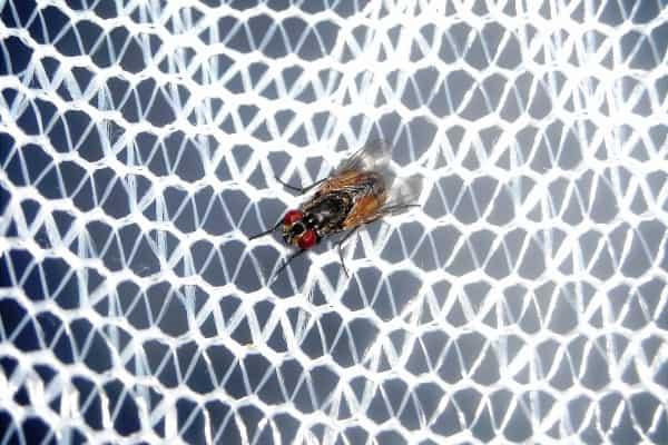 imagen de una mosca en una mosquitera